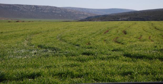 Nisan Yağmurları Çiftçileri ve Besicileri Sevindirdi