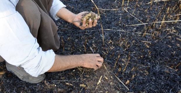 Arpa ekili tarla yandı