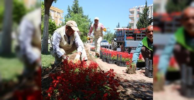 Çiçekler, Haliliye'nin park ve sokaklarına güzellik katacak.