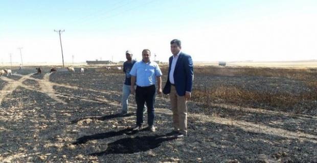Harran'da 300 dekar hububat ekili alan yandı