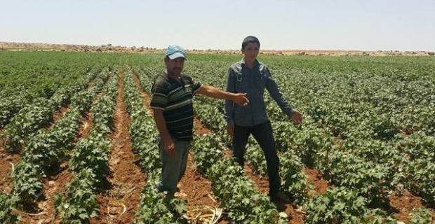 20 gündür suyun gelmemesi çiftçileri çileden çıkardı.