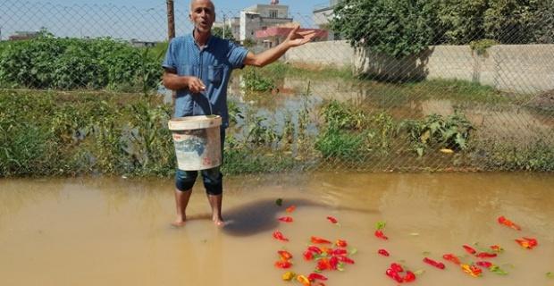 Suruç'ta ev ve iş yerlerini su bastı