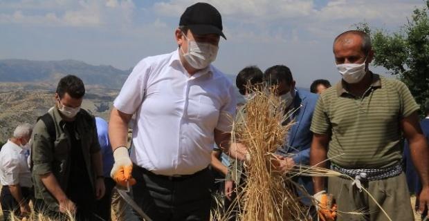 Şırnak Valisi Pehlivan,Balveren Beldesinde çiftçilerle tarlada buluştu.