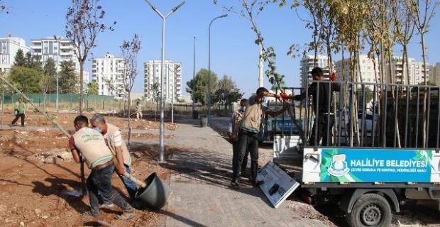 Haliliye Belediyesi, yeni ve mevcut parklarında çalışmaları titizlikle yürütüyor