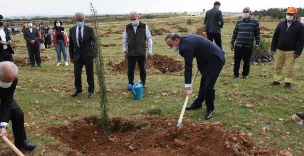 8 Mart Ağaçlandırma Etkinliği