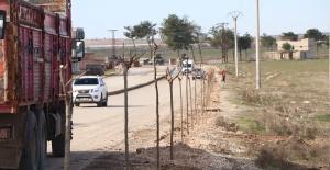 Akçakale Gümrük Yolu SUDKOM Tarafından Ağaçlandırılıyor