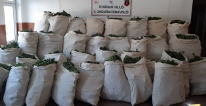 Lice kırsalında 1 milyon 119 bin kök kenevir bitkisi ele geçirildi