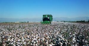 Başkan Peltek,pamuk üreticisinin hem fiyat hem de prim desteğinde artış beklediğini söyledi.