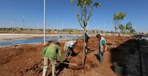 Haliliye'de yeni parkların ağaçlandırma işlemlerine başlandı
