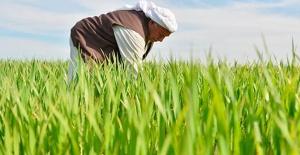 14 Mayıs Dünya çiftçiler günü kutlu olsun!
